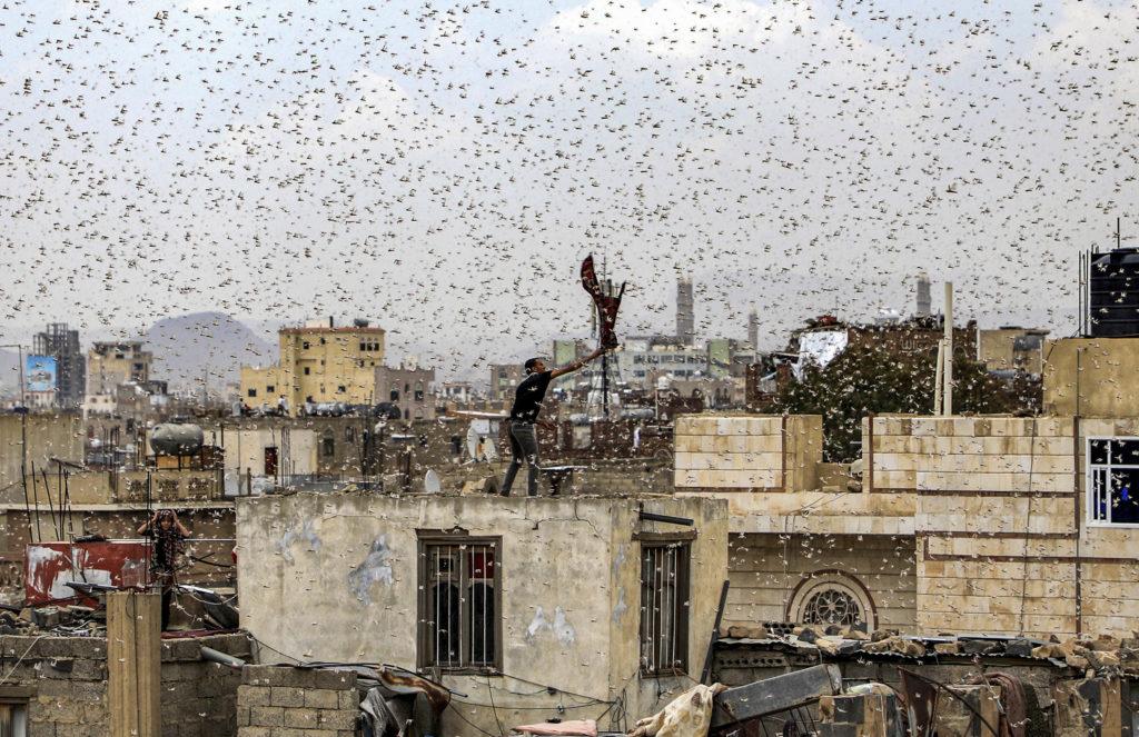 Locusts swarm over Sanaa, Yemen's capital, in July 2019.